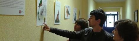 """Un treball sobre la """"il·lustració científica"""" realitzat per alumnes de l'Escola d'Art i Superior de Disseny d'Olot, s'exposa a """"El passadís"""" del Cor de Maria."""